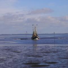 Pottwal vor Nordseeinsel gestrandet